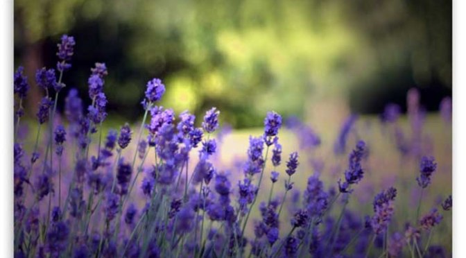 Lavender Recovery Recipe Skin Drink